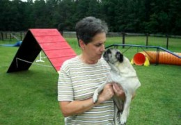 Daisy Is Alisha's Agility Dog Pride And Joy