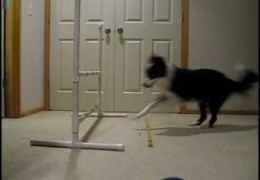 How to Teach Your Dog Jump Collection