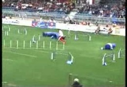 Crazy About Dog Agility