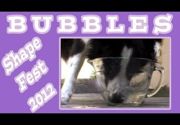 How to Teach Your Dog to Blow Bubbles with Shaping