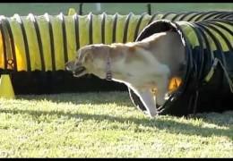 Slow Motion Dog Agility From QAJDC Trial