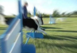 Bizarre Things Our Agility Dogs Do