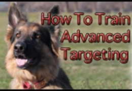 How To Advance Your Dog's Targeting or Touch With Tab