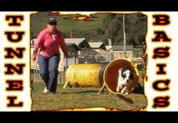 Pam Show How to Start Your Dog on The Tunnel