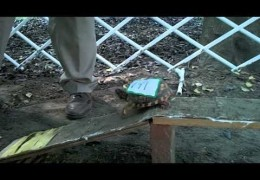 It Just Wont End – Turtle Agility