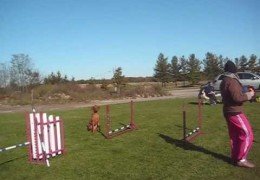 More Dog Agility Grid Work with Susan Salo