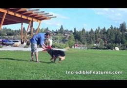 Champion Three-Legged Frisbee Dog