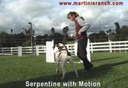 5 Minute Dog Agility Training With Debbie Wheeler