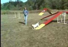 How To Start In Dog Agility Pawsitive Approach