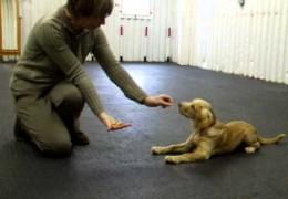 Foundation Dog Agility Training For Puppy