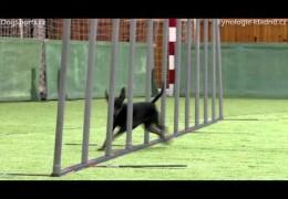 Diversity Of Breeds In Dog Agility In Sletiště 2012