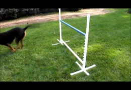 Chloe doing agility