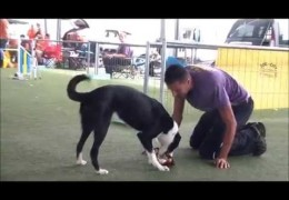 What is Your Reason For Doing Dog Agility