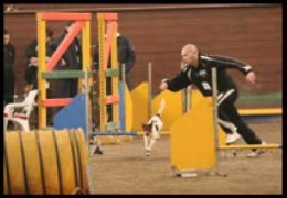 Jack Russell, Zorro, Compulation of Dog Agility Pictures