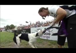 2013 Large Dog Agility Winner of PIDC St. Petersburg, FL