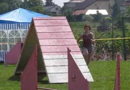 Jack Russell, Babsi, Runs This Dog Agility Course Fast