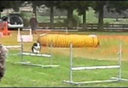 Great Advanced Flygility Runs