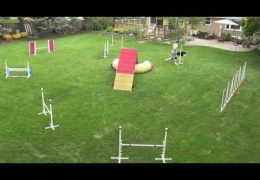 Great Backyard Dog Agility Course
