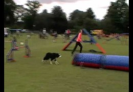 Dish's Tunnel Accident in Dog Agility Competition