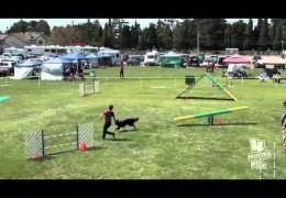 Zappa's Dog Agility Jump Crash