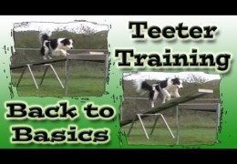 Reteaching the Teeter / Seesaw After a Scare