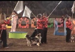 SUPERDOGS Performance Is Amazing at The National Western Stock Show