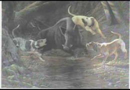 All About the Catahoula Leopard Dog
