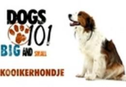 All About The Kooikerhondje Agility Dog