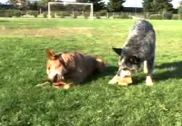 Learn More About how Your Dog Learns