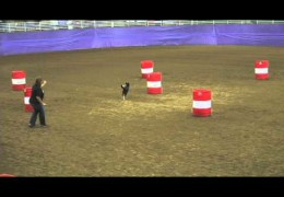 NADAC Extreme Barrels Is For Dogs Not Horses