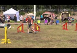 This Four Team Dog Agility Relay is All Afghan Hounds