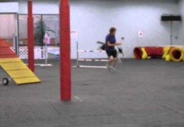 Inside Scoop on Dog Agility Snooker Courses