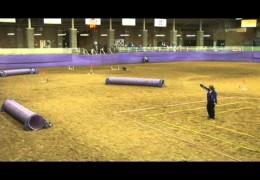 Amanda & Try at the 2012 NADAC Championships