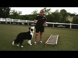 Agility Dog Strength Training with the Ladder Walk