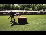 Agility Dog Rear End Strength Training With a Box Jump