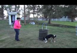 Great Example of Dog Agility Barrel Work