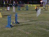 Though He Be Small He be Mighty in Dog Agility