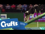 These Kids Have Nerves of Steel in Dog Agility