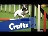 2015 Rescue Dog Agility at Crufts Never Disappoints