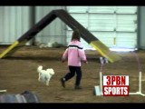 Kids are the Future of Dog Agility