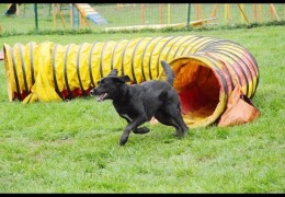 Tunnelers Allows This Dog Agility Team to Compete Again
