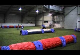 Amazing Run at Finnish Dog Agility Tunnel Cup
