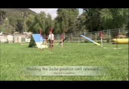 What Can You Accomplish In 5 Minutes of Dog Agility Training