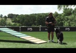 Advancing Your Dog on the Dog Agility A-Frame