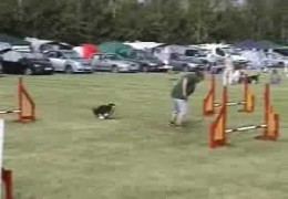 Shetland Sheepdogs Loving Dog Agility