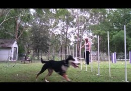 Dog Agility Weave Grab Exercise