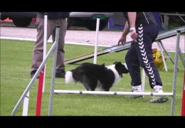 Dog Agility Bloopers Happen To Us All