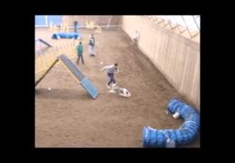 Great Dog Agility Training Bloopers