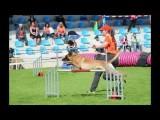2015 FMBB Dog Agility World Champions
