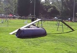 This Shih Tzu Excels in Dog Agility